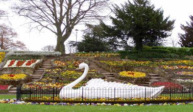 Swan at Stapenhill Gardens